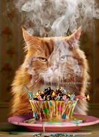 cranky cupcake cat