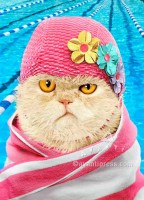 cranky swim cap cat