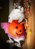 700255_Halloween