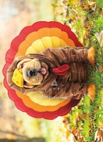 700392_Thanksgiving